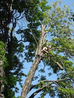 Best affordable tree service in DFW area Weatherford TX