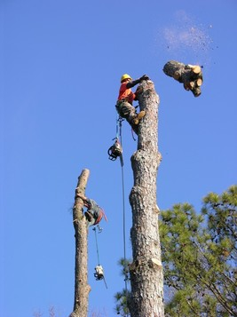 tree removal example