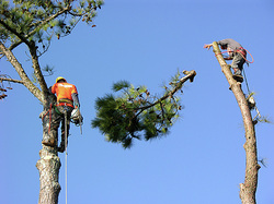 cost of tree service watauga TX